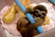 slothss