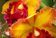 Orchids / by Sandra Waldrop