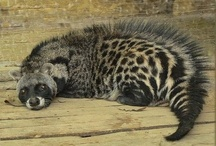 Rarest Animals of the World