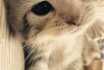 Hayvanları seviyoruz / Evcil yabani farkı gözetmeksizin hayvanları seviyoruz. Minik ve sevimli olanları tabii ki daha fazla...