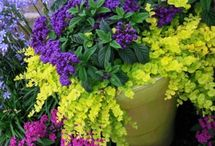 Pot and Container Ideas / by Linda Finni