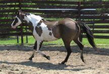 All the pretty horses / I wana b the crazy horse lady! / by Seanna Quinn