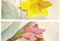 fiorellino carta tate