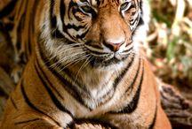 Ο όμορφος κόσμος των ζώων..