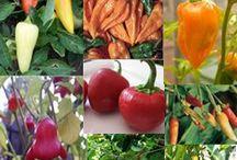 Planter og grøntsager