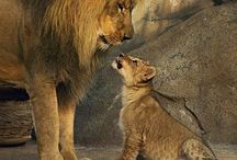 Lions / Lots of love