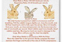 Konijnen / Van alles over konijnen.