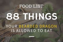 Bearded Dragon health
