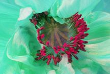 Colors / by Maya Torres