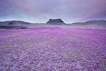 Beautiful Purple!