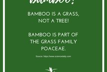 Bamboo Clothing - Fun Facts!