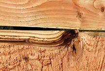 Pioneer log siding pics