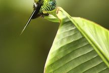 Photography - Hummingbirds / by Bill Moeller