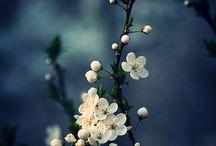 foto di fiori