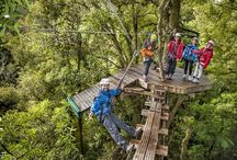 Canopy Tours 16/10/16