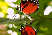 butterflies, dragonflies, hummingbirds, and moths / by Belinda Fischer Angell