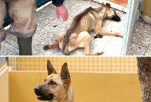 jak ludzie potrafią zaniedbać zwierzęta