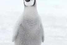Pequeño pingüino