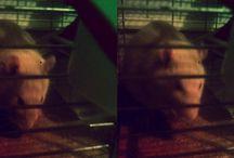 Mon rat !