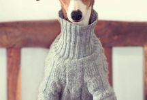 Greyhounds ❤️