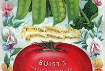 I love......vintage seed packs. / There is such beauty in in the drawings.. / by Sandy Kohring