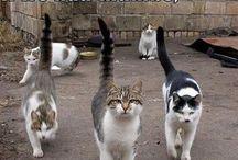 """Cat"" mandu / by Laura Smith"