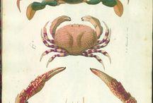 zodiac - cancer / by Magnolias West
