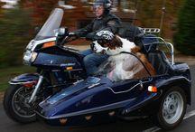 sidecar / by Kathy Parmley