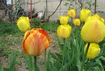 Flori / Flori din gradina