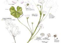 Plants:  Botany