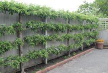 Countryside Garden / Garden Design Inspiration