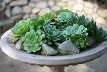 Outside / by Shelley Conyers