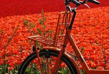 ORANGE - RED