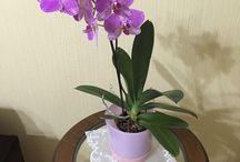 Orkidemiz