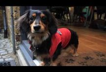 Dog Videos from BorrowMyDoggy / Videos featuring wagalous pooches from BorrowMyDoggy