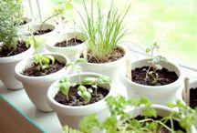 Cultiver les aromates et plantes