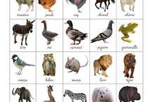 Montessori nomenclature