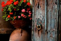 flowers & old doors or windows