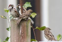 Birds / Bird photography