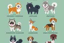 Dog Breeds / Pins about certain dog breeds or information about what certain breeds are best at.  #dogs #dogbreeds