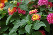 garden plants 4 me / by Rosemary Quesada