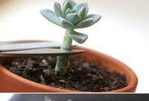 Plants and green stuff.