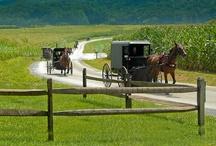 Amish Life / by Sally Bailey