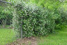 Client Project: Beech Knoll / Landscape Project - Laurel Canyon, LA