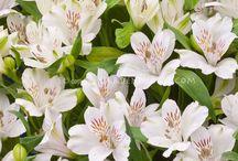AFTW Flower Guide