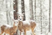 Wild life/Nature / by Gayla Pressner