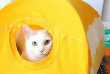 Casa de gatos