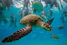 Places in Barbados / Great places to see in Barbados