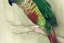 Papoušci