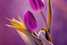 zdjęcia - kwiaty............